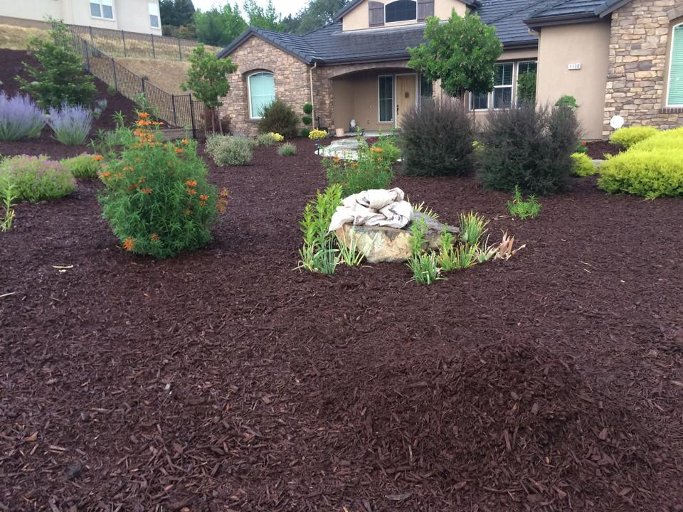 Sacramento Commercial Lawn Care Yard Clean Up Yelp