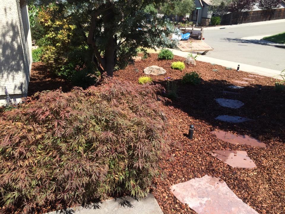 drought-tolerant-landscape-design-in-Sacramento-CA-by-Romeros-Landscape-Inc-014