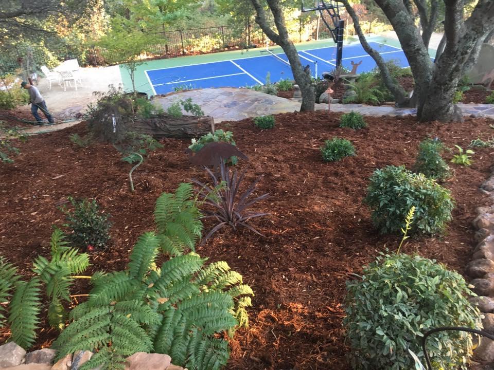 drought-tolerant-landscape-services-in-Sacramento-CA-by-Romeros-Landscape-Inc-002