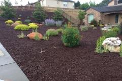 drought-tolerant-landscape-design-in-Sacramento-CA-by-Romeros-Landscape-Inc-005