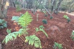 drought-tolerant-landscape-services-in-Sacramento-CA-by-Romeros-Landscape-Inc